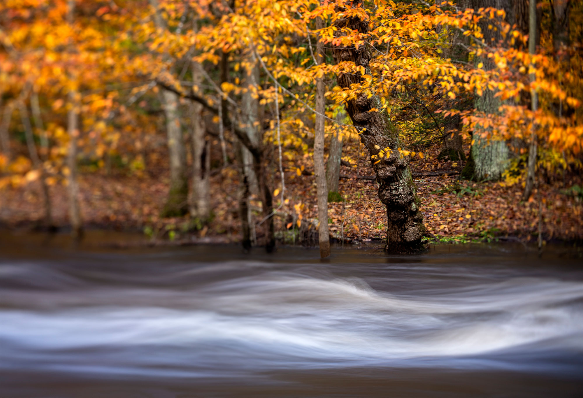 Fall trees along flowing river New Jersey-Wisp