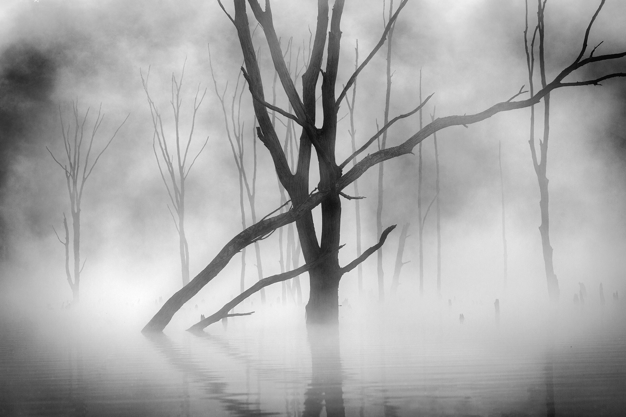 Black white photograph dead trees in fog on lake New Jersey-Ghost