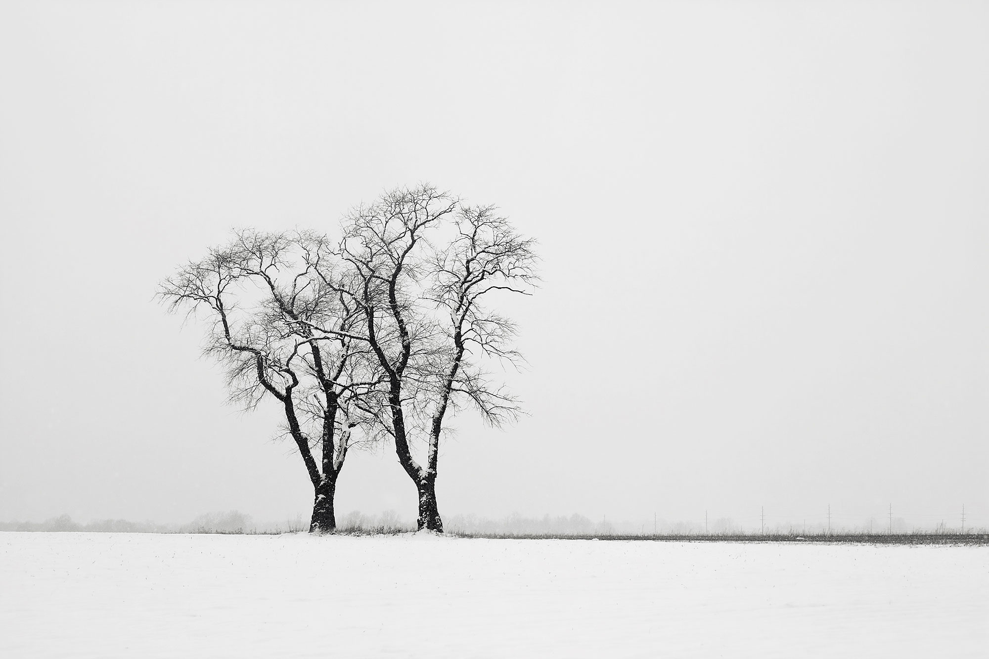 Snow covered trees in open field New Jersey-Companions
