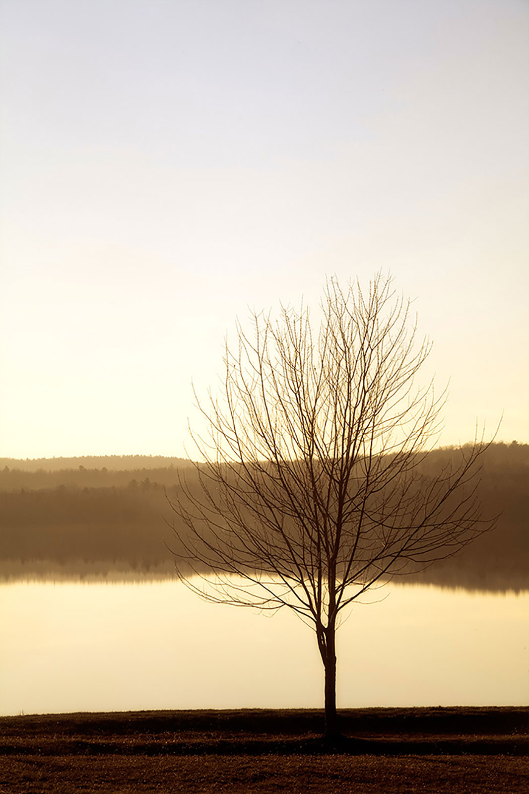 Sunset tree at lake in Vermont-Carmi